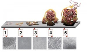 How Biofilm Grows